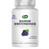 康纽莱抗氧化葡萄籽天然维E软胶囊维生素ve美容白淡斑花青素精华